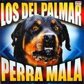 Perra Mala by Los Del Palmar