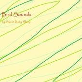 Bird Sounds - Single de Sweet Baby Sleep