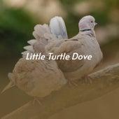 Little Turtle Dove de Anita O'Day, Doris Day, Dinah Shore, Otis Williams