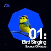 Birds Singing de Sounds Of Nature