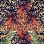 Phoenix by Trim
