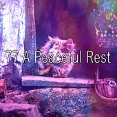 77 A Peaceful Rest by Ocean Sounds Collection (1)