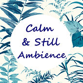Calm & Still Ambience by Various Artists