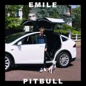 Pitbull by Emile