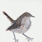 Nightingale Wake Up Calls de Cosmo Sheldrake
