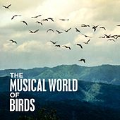 The Musical World of Birds von Various Artists