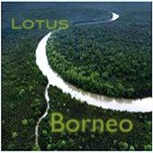 Borneo by LOTUS