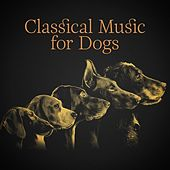 Classical Music for Dogs de Various Artists