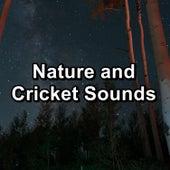 Nature and Cricket Sounds de Nature Sound Collection