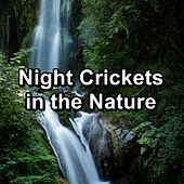Night Crickets in the Nature de Nature Sound Collection