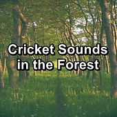Cricket Sounds in the Forest de Sleep Sounds of Nature