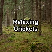 Relaxing Crickets de Nature Sound Collection