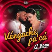 Vengache Pa'ca de Bichi