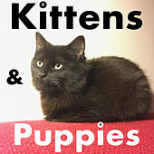 Kittens and Puppies by LoKi the Nameless