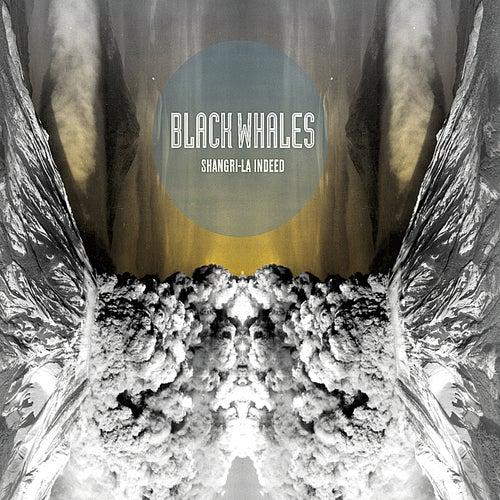 Shangri-La Indeed by Black Whales