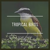 Tropical Birds by Nature Sounds (1)