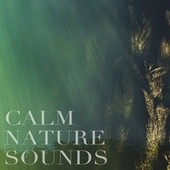 Calm Nature Sounds by Nature Sounds (1)