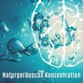 Naturgeräusche Konzentration: Entspannungsmusik Geführte Meditation von Entspannungsmusik Dream