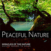 Peaceful Nature - Miracles Of The Nature by Nature Sounds (1)