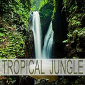 Tropical Jungle by Nature Sounds (1)
