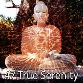 47 True Serenity de Massage Therapy Music
