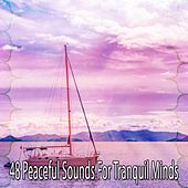 48 Peaceful Sounds for Tranquil Minds by Relaxing Mindfulness Meditation Relaxation Maestro
