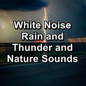 White Noise Rain and Thunder and Nature Sounds by Thunder Sounds