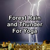 Forest Rain and Thunder For Yoga de Relax Attack