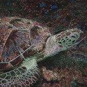 Stories From The Sea Club von Art Blakey