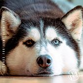 Songs for Home Alone Dogs, N4 de Various Artists