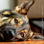 Songs for Home Alone Dogs, N5 de Various Artists