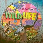 Maloto / Dreams by Wild Life