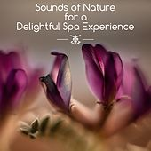 Sounds of Nature for a Delightful Spa Experience von Sauna Spa Paradise