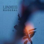 Ruderal (Ruinas Lado B) de Lynx