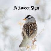 A Sweet Sign van Rain Sounds (2)
