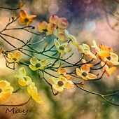 May by David Cook