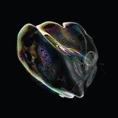 Iris by Tom Trago