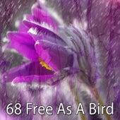 68 Free as a Bird von Entspannungsmusik