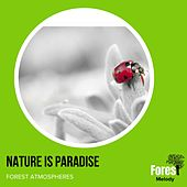 Nature is Paradise - Forest Atmospheres von Various
