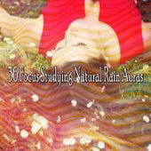 36 Focus Studying Natural Rain Auras de Thunderstorm Sleep