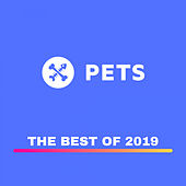 PETS Recordings best of 2019 by Various Artists