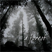 A Forest by Various Artists
