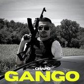 Gango de El Chapo De Sinaloa