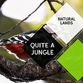Quite a Jungle - Natural Lands by Sleepy Times