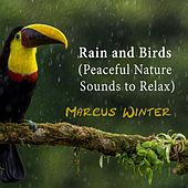 Rain and Birds (Peaceful Nature Sounds to Relax) by Marcus Winter