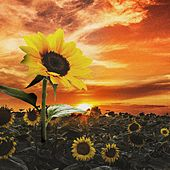 Sunflower by Emmanuel