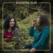 Silvestre Flor de Madreluz