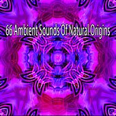 66 Ambient Sounds of Natural Origins de Exam Study Classical Music Orchestra