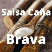 Salsa Caña Brava de Ismael Rivera, Johnny Pacheco, Oscar D' Leon, Pete ''El Conde'' Rodriguez, Puerto Rican Power, Ray Barretto, Ray De La Paz