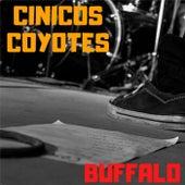 BUFFALO (En Vivo) by Cinicos Coyotes